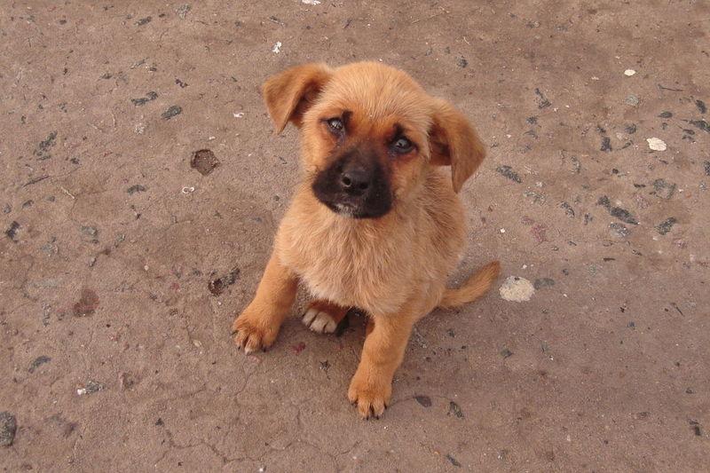 Ves un cachorro que necesita hogar en la calle, tú: