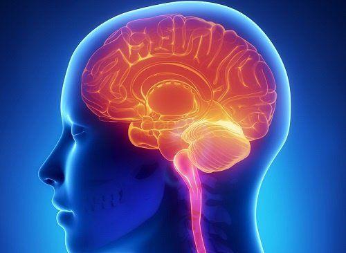 Solo usamos el 10% de nuestro cerebro