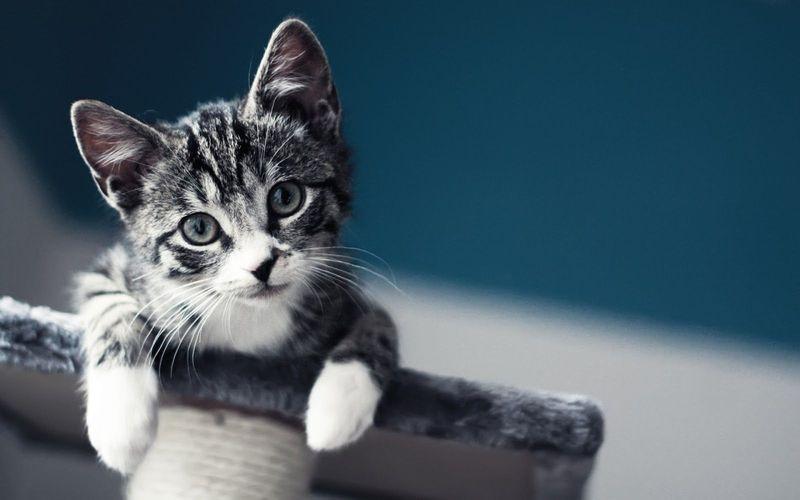 Los gatos siempre caen de pie.