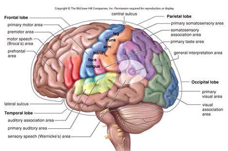 18565 - ¿Cuánto sabes del cuerpo humano? Avanzado