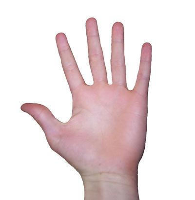 ¿Cuántos huesos tiene la mano?