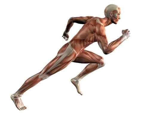 ¿Cuál de estos no es músculo del miembro inferior?