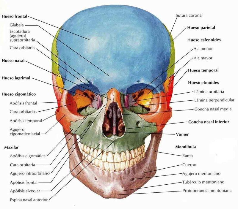 Viralízalo / ¿Cuánto sabes del cuerpo humano? Avanzado