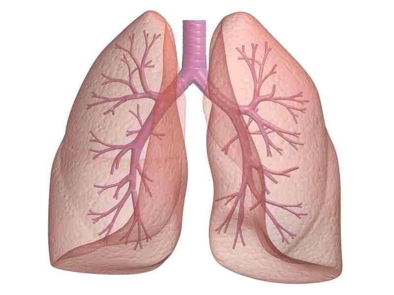 ¿Donde se encuentra el colon ascendente del intestino grueso?