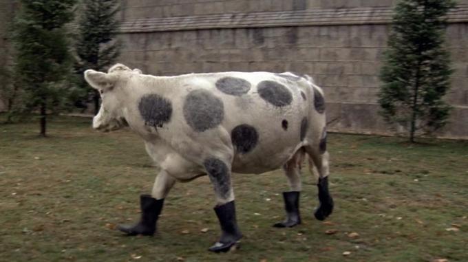 ¿En qué comedia absurda de los 80 aparecía esta 'vaca'?