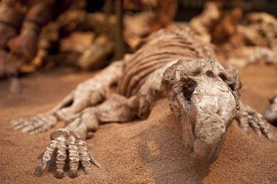 ¿Estará el ser humano extinto?