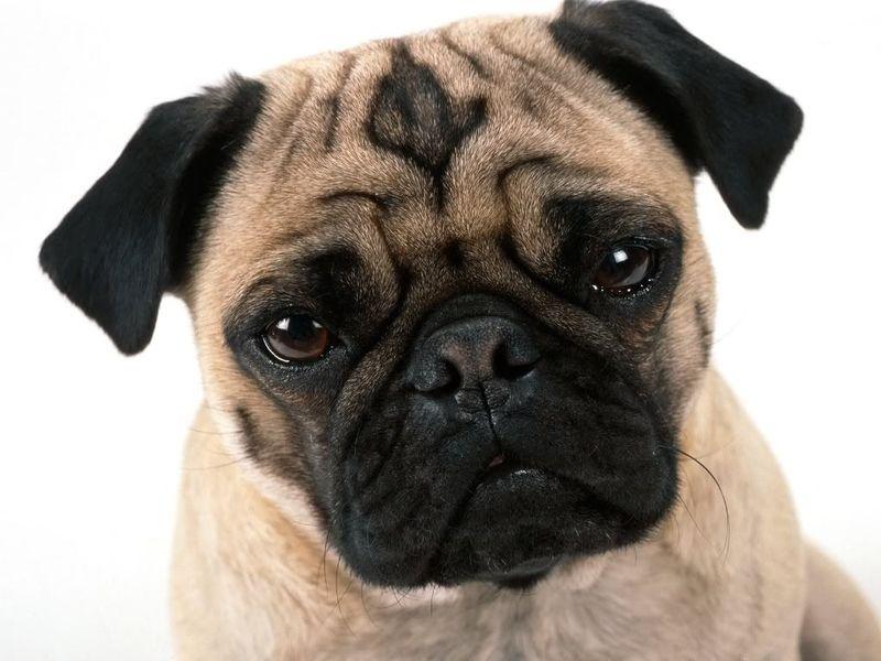 E de decir que soy un gran fan tuyo y hay algo en ti que... me pasa como con los perros estos tan feos, los carlinos son feos...