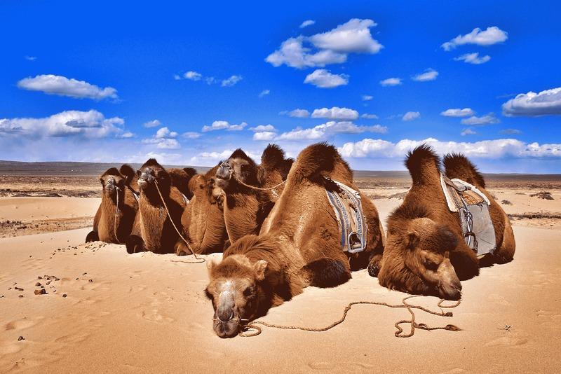 Comencemos con una pregunta de geografía. ¿Cuál es el país con mayor población de camellos?