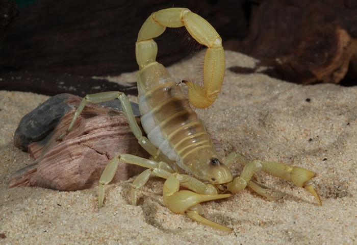 ¿Comerte una tarántula o un escorpión?