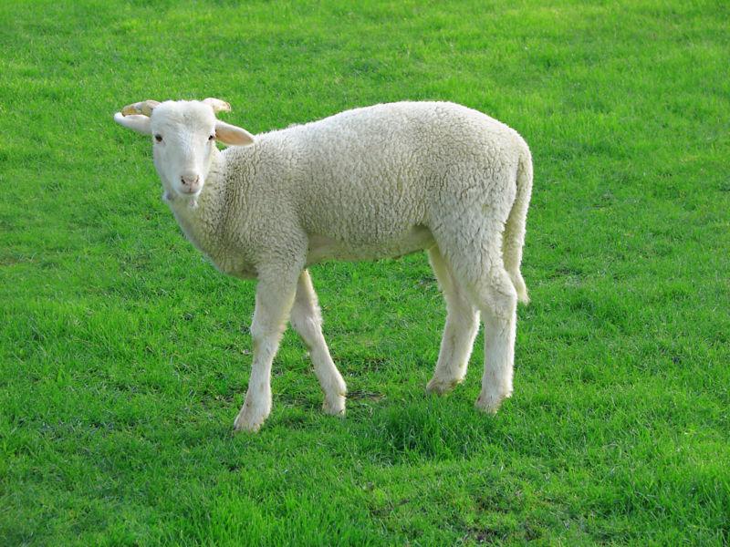 Betty Sloobs tenía una granja con ovejas, tras unos días sin poder alimentarlas, ¿Qué ocurrió cuando fue a llevarles el heno?