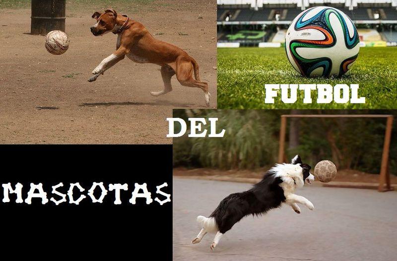 16480 - ¿Puedes reconocer a estas mascotas del fútbol?