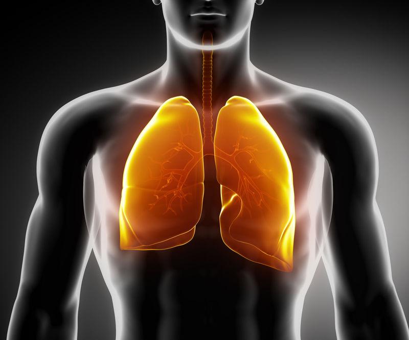 ¿Cuánto pesa aproximadamente cada pulmón?