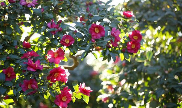 ¿Qué es lo que primero que piensas cuando se habla de flores?