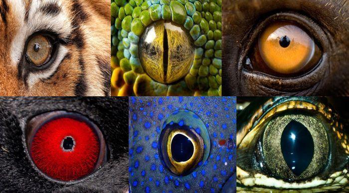 19883 - ¿A qué animales pertenecen estos ojos?