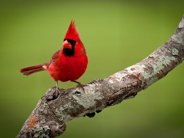 ¿Existe algún pájaro que nunca come?