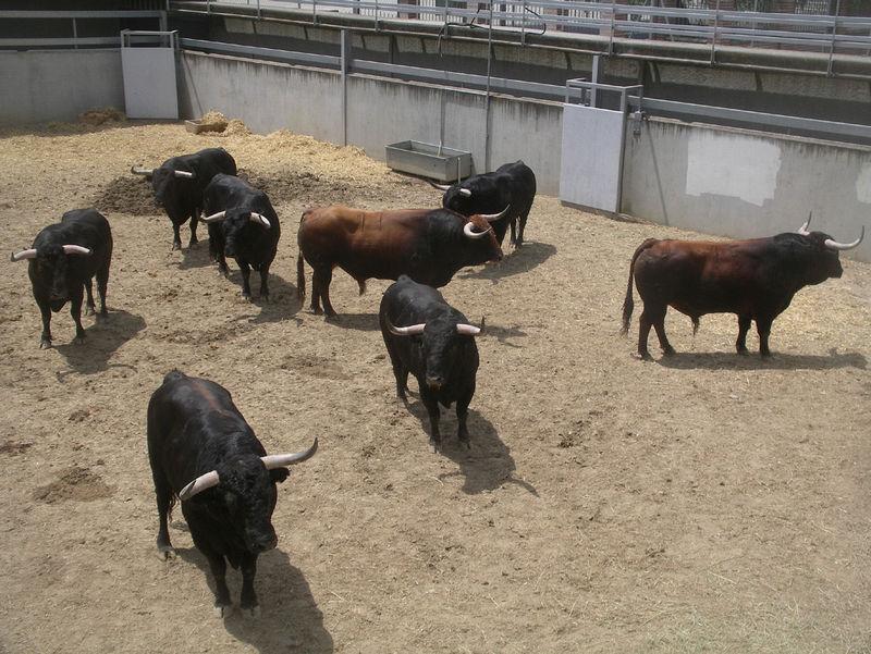 21231 - Opiniones acerca del maltrato animal