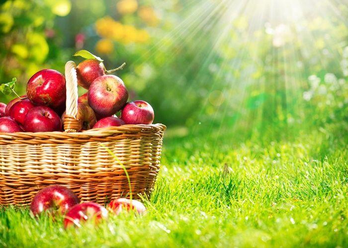 Tenías 18 manzanas. Regalaste un tercio. ¿Cuántas te quedan?