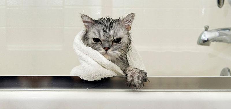Tienes mucho calor y te vas a bañar. ¿Con qué te bañas?