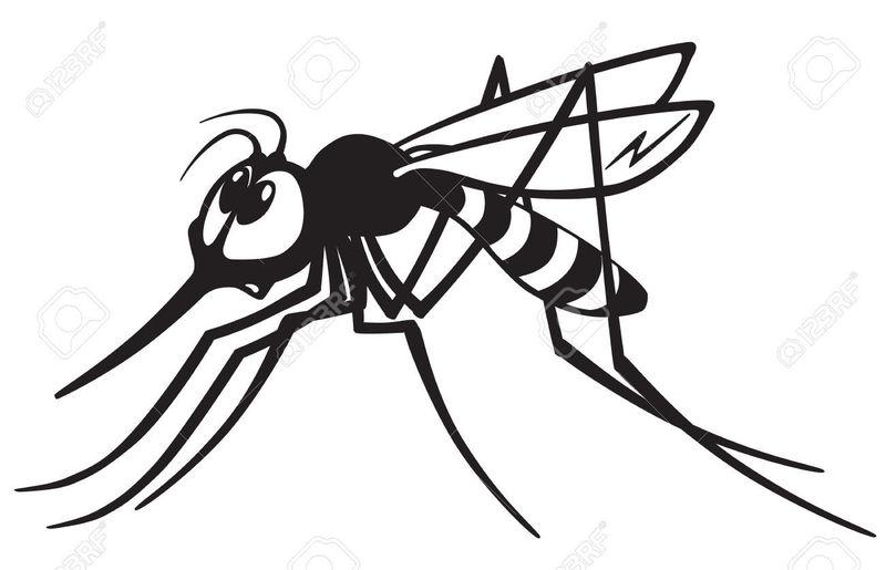 De repente, ¡un mosquito salvaje apareció! ¿Qué haces ahora entrenador?