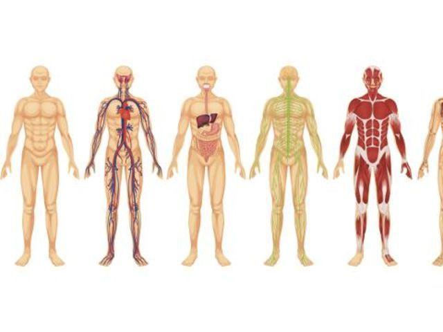 ¿Cuantos sistemas tiene el cuerpo humano?