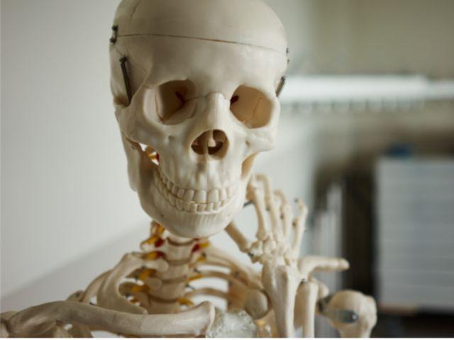 ¿Qué elemento en los huesos indica que el crecimiento de la persona ha terminado