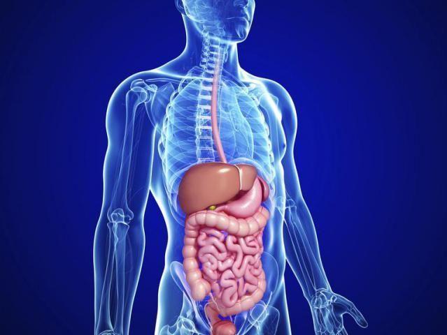 ¿Cuál de los siguientes organos posee una capa muscular capaz de contraerse?