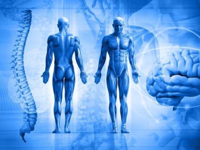 ¿Cuál sistema es responsable del 80 % del calor que genera el cuerpo humano?