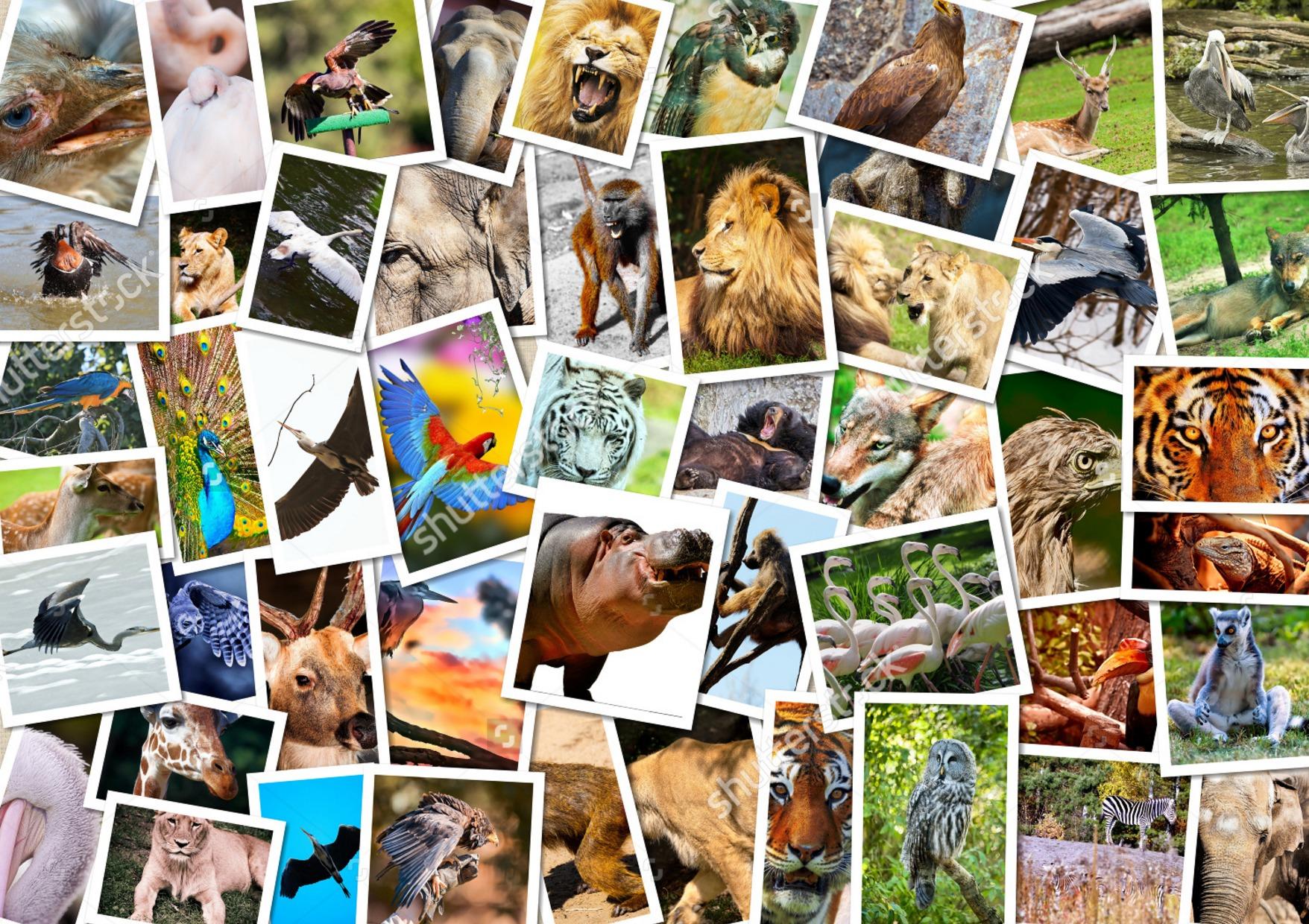 21396 - ¿Sabrías el nombre científico de los siguientes seres vivos?
