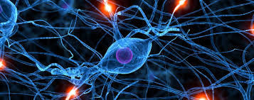 ¿Cuál es la función de la hormona FSH?