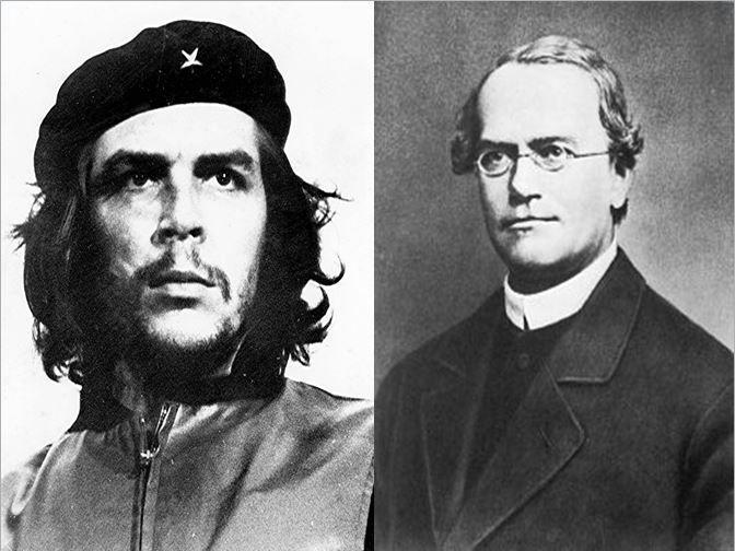 Che Guevara, comandante de la Revolución Cubana vs Gregor Mendel, padre de la genética moderna