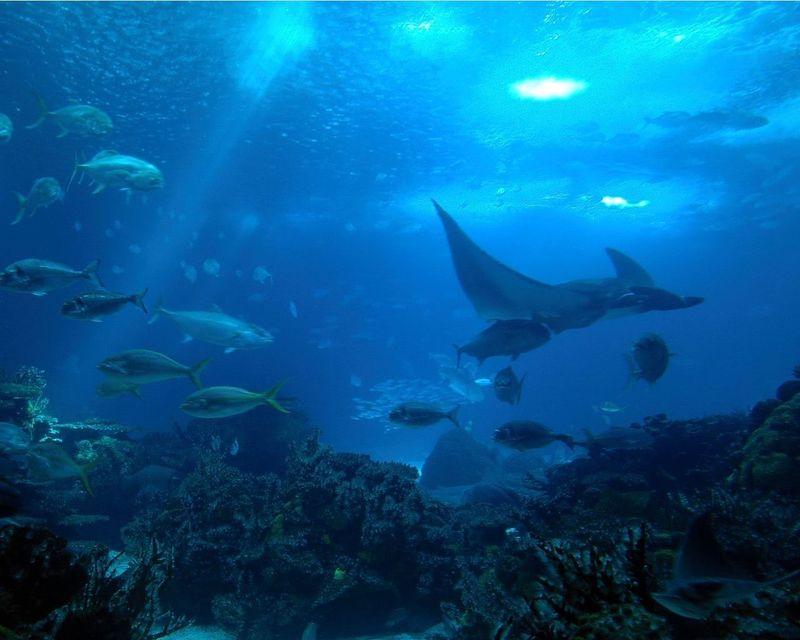 Respirar y moverte más rápido bajo el agua, pero no poder estar mas de 2h sin agua.