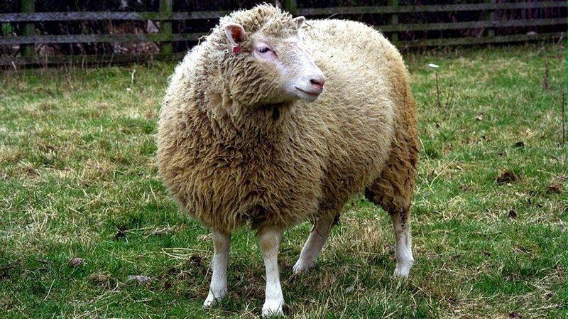 ¿Cuál fue la fecha de nacimiento de la oveja Dolly, el primer mamífero clonado a partir de una célula madre?