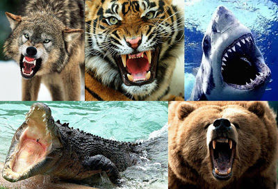 22906 - ¿Qué animal provoca más muertes sobre los humanos?
