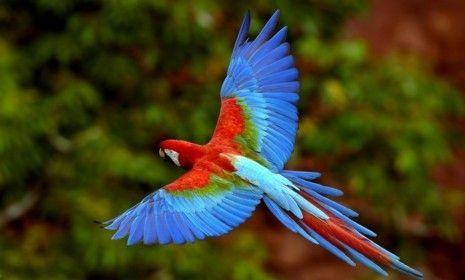Las aves no saben volar hacia atrás