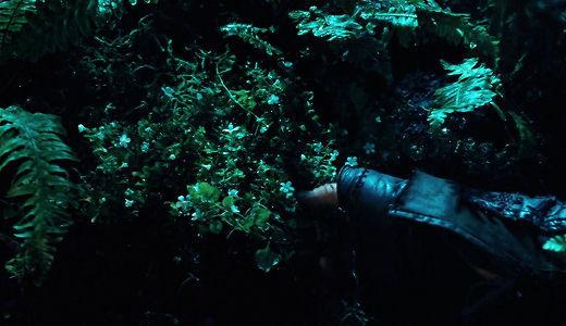 Llegaste bastante herido al Bosque viejo debido a todos los viajes hechos , Tom te cura con una Hoja de reyes ¿ como se llama ?