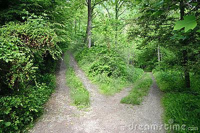 Sales fuera,  ves un bosque y un camino que al poco parece bifurcarse uno baja y otro sube ¿Que camino tomas?