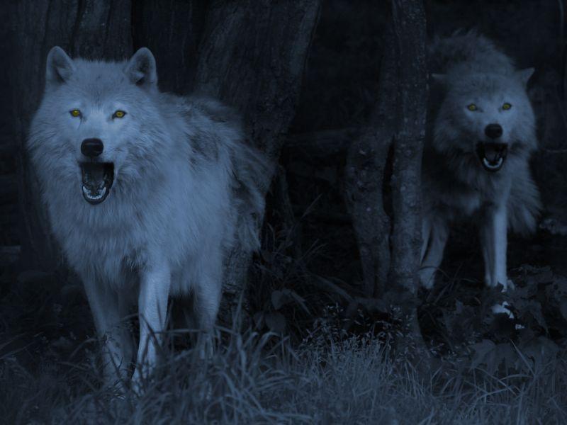 Sigues el sendero hasta llegar a un gran barranco, al girarte ves una manada de lobos que se acerca hacia ti.