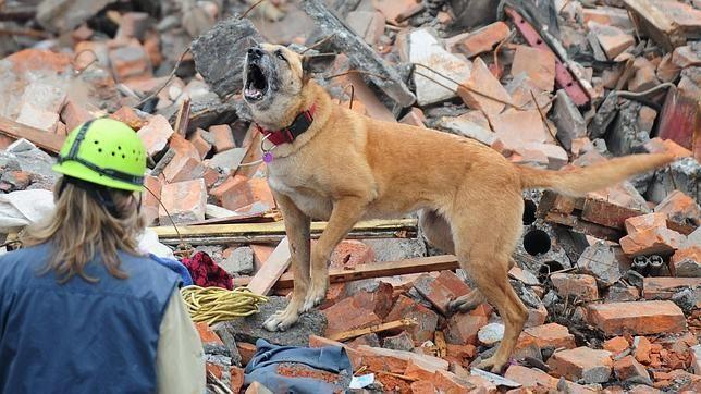 Los animales prevén los terremotos