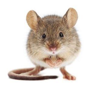 Vuestra primera tarea es simple: Lanzad algún hechizo que conozcáis sobre éste ratón.