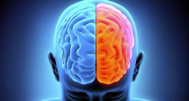 Resultado de imagen para hemisferios cerebro gif