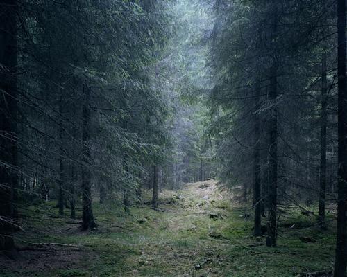 Te decides por los bosques, ¿Quién sabe que clase de criaturas te encontraras en él?