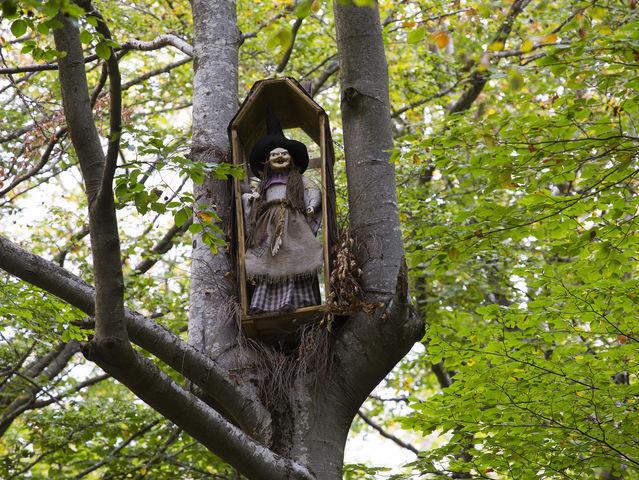¿En qué bosque de la provincia nos podemos encontrar a este personaje?