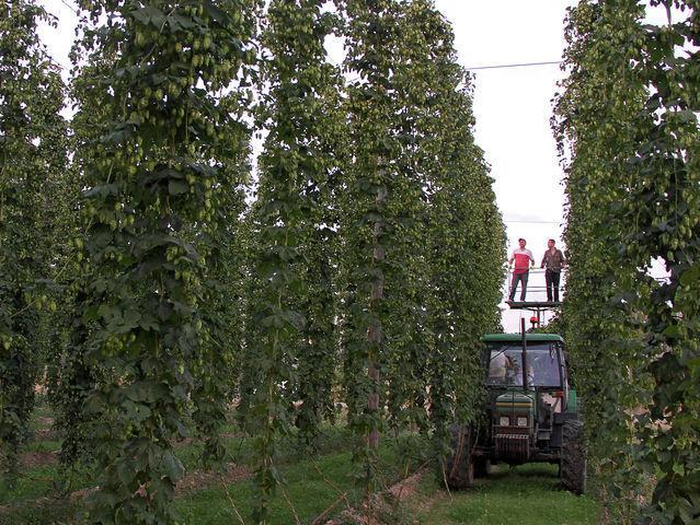 ¿Cuál es la ribera más 'cervecera' de la provincia?