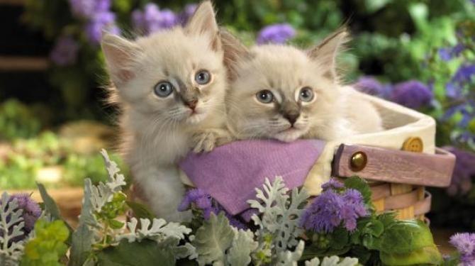 ¿Qué personaje famoso le tenía fobia a los gatos y si veía uno se sentía enfermo?