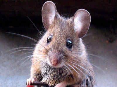 ¿Que famoso personaje le tenia fobia a los ratones?