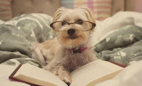 1425 - Si fueras un perro, ¿de qué raza serías?
