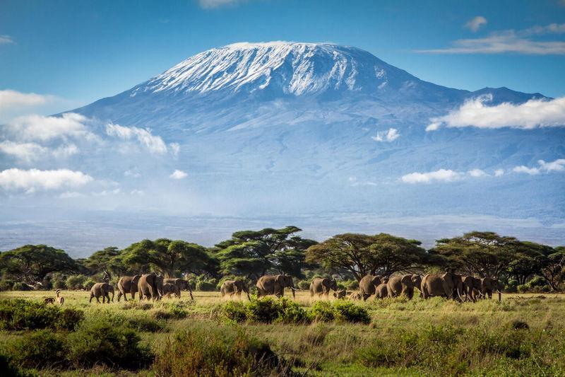 ¿Dónde está situada la montaña más alta de África?