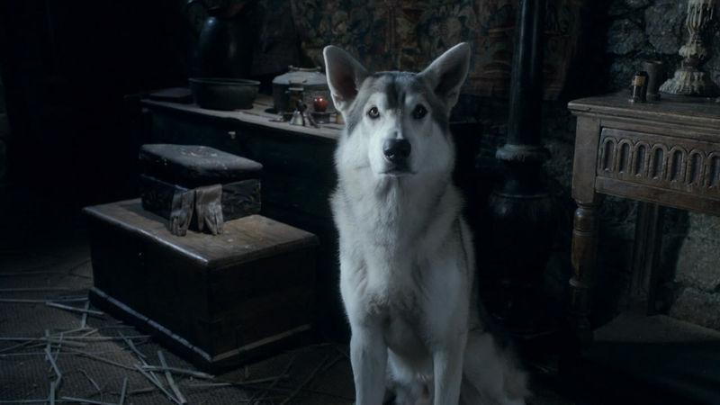 ¿Cómo se llama el lobo huargo de Arya Stark?