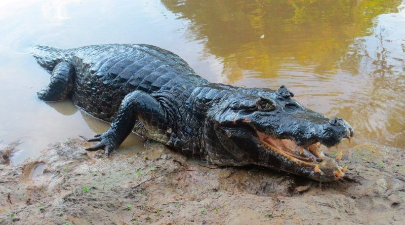 ¿Y este amable reptil?