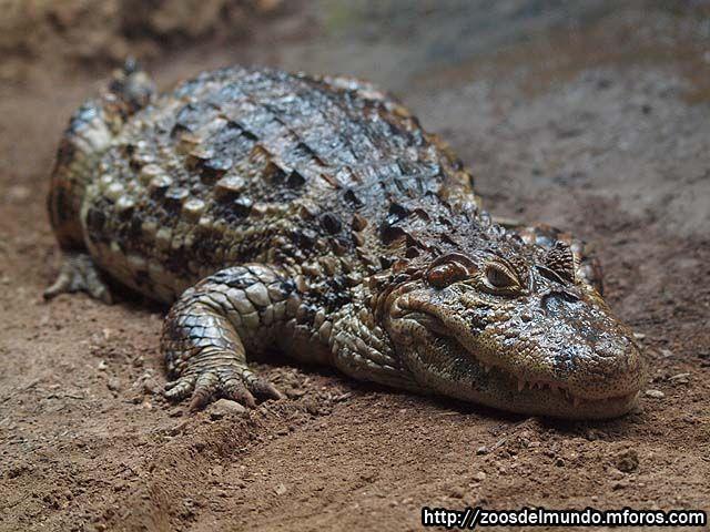¿Y este pequeño pero mortal compañero reptiliano?